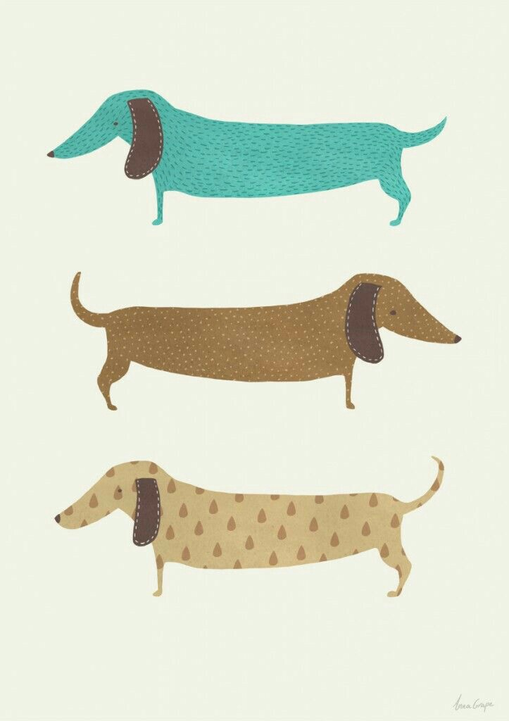Dachshund-wallpaper-wp4002202