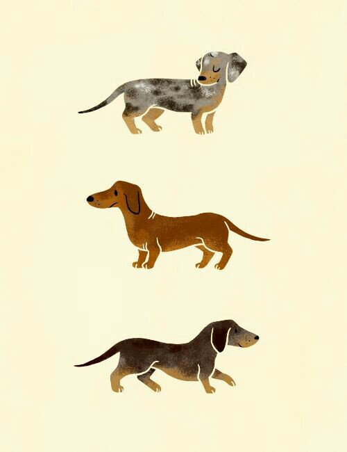 Dachshund-wallpaper-wp4002204