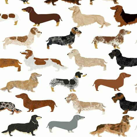 Dachshund-wallpaper-wp4002215