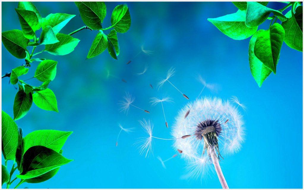 Dandelion-White-Flower-Blue-Background-dandelion-white-flower-blue-background-wallpaper-wp3404433
