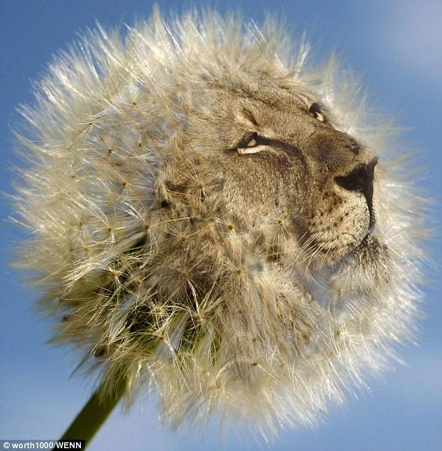 Dandy-Lion-wallpaper-wp4406269