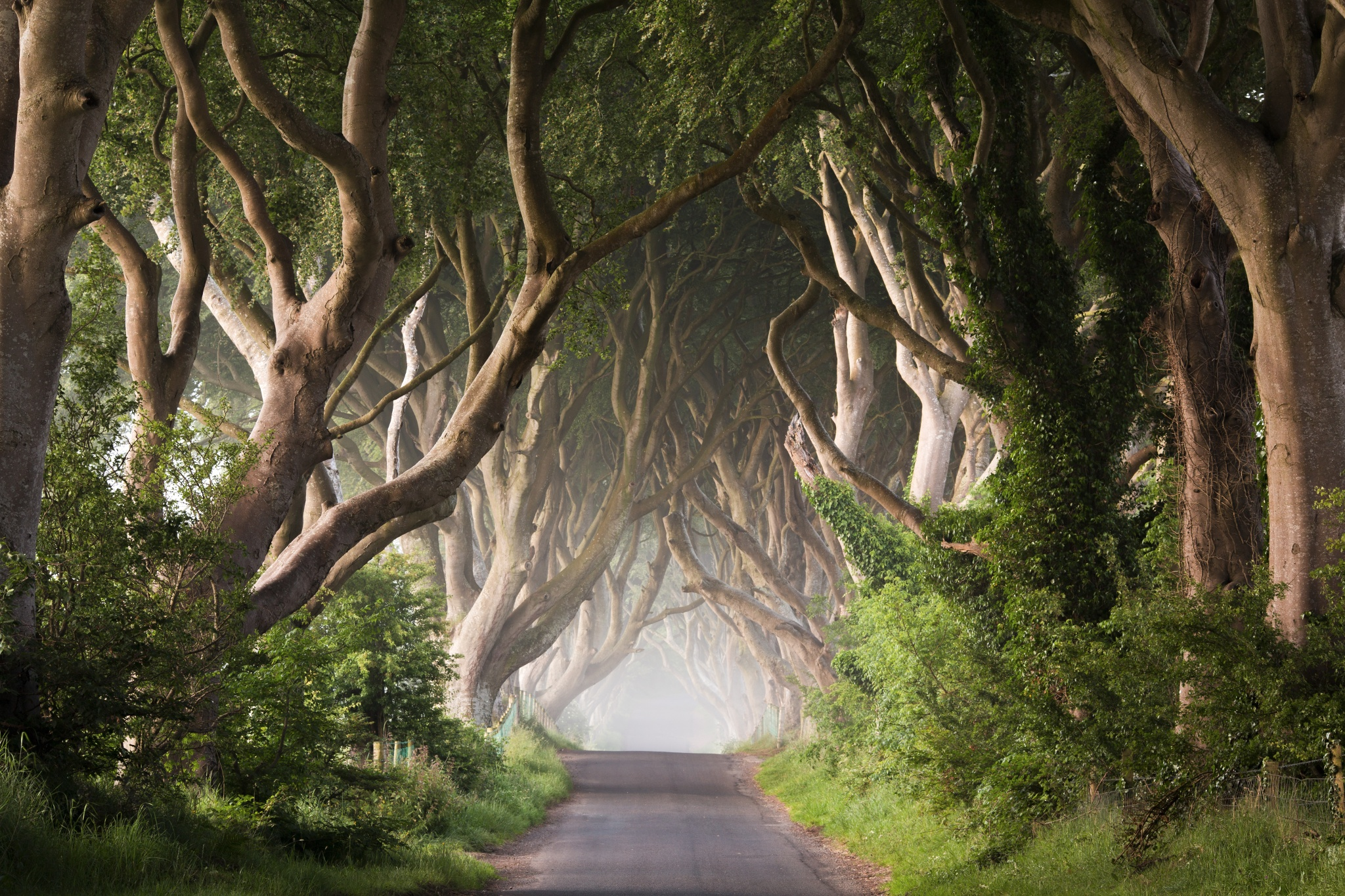 Dark-Hedges-Games-of-Thrones-by-Przemyslaw-Zdrojewski-on-px-wallpaper-wp424843