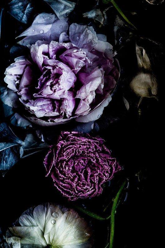 Dark-Moody-Winter-Florals-wallpaper-wp4805769