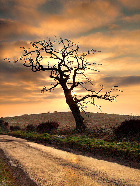 Dead-Tree-II-by-Peter-Ribbeck-wallpaper-wp5404458