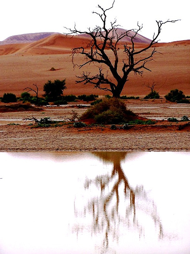 Dead-Tree-Sossusvlei-wallpaper-wp5404456