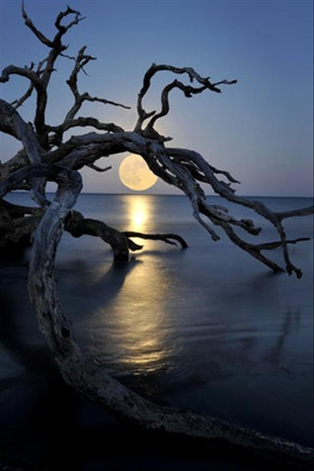 Dead-Tree-full-moon-on-the-water-wallpaper-wp5404462