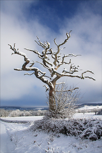 Dead-Tree-in-Snow-wallpaper-wp5404459