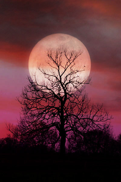 Dead-Tree-there-s-a-full-moon-on-the-rise-wallpaper-wp5404463