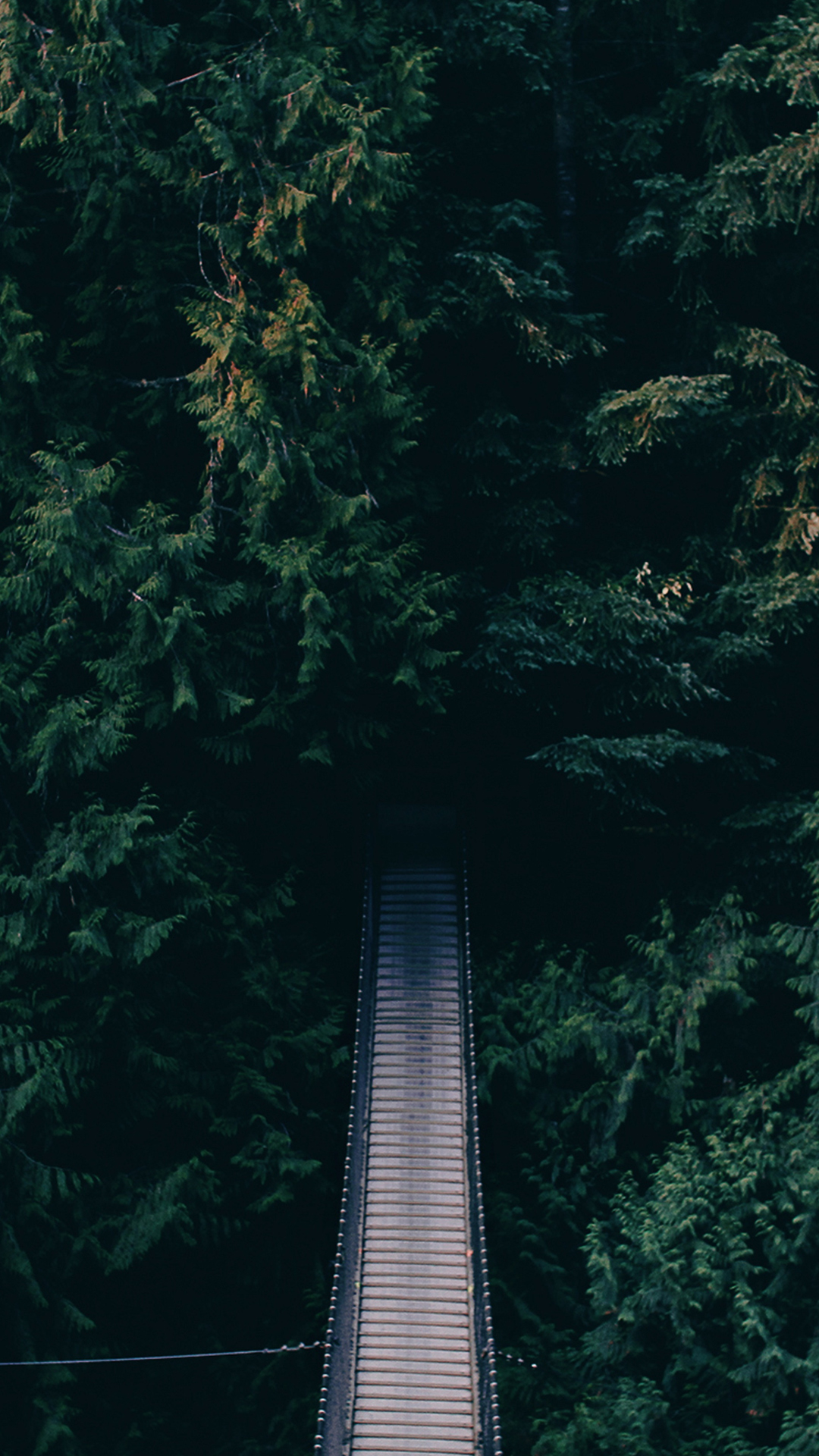 Dense-Green-Forest-Bridge-Android-Android-wallpaper-wp5404490