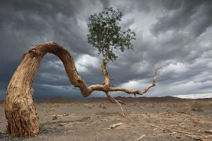 Desert-Tree-Gobi-Desert-Mongolia-Amazing-nature-image-landscape-photography-beauty-of-wildlife-wallpaper-wp4406359