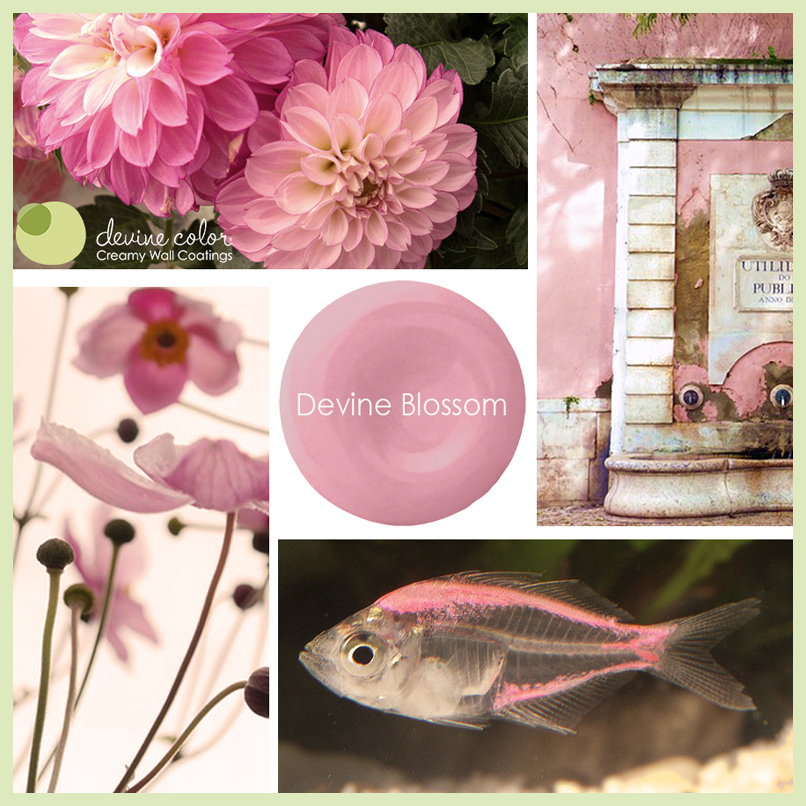 Devine-Blossom-a-blooming-pink-from-Devine-Color-Exclusively-at-Target-paint-devinecolor-wallpaper-wp5205783