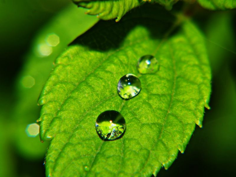 Dew-Drops-On-Green-Leaf-wallpaper-wp5404523