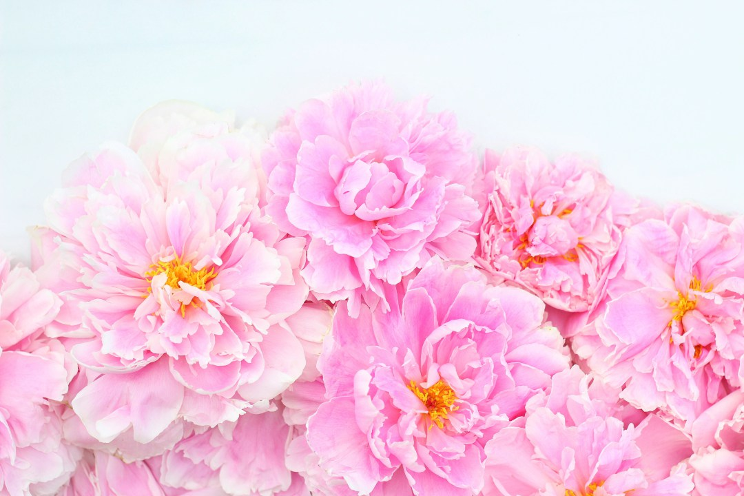 Digital-Blooms-Desktop-July-JustineCelina-com-x-Rebecca-Dawn-Design-wallpaper-wp3004964