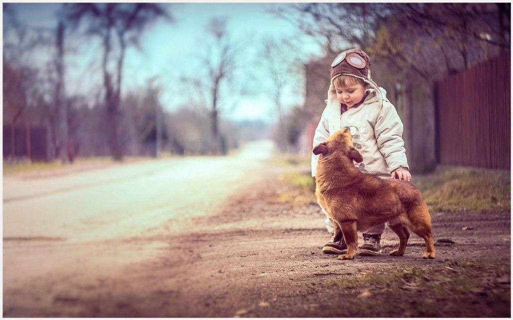 Dog-Boy-Cute-dog-boy-cute-1080p-dog-boy-cute-desktop-dog-boy-cute-wallpaper-wp3404731