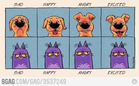 Dogs-vs-Cats-lol-I-m-a-dog-person-all-the-way-D-wallpaper-wp3005104