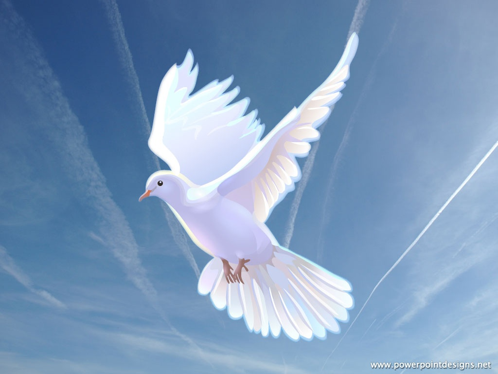 Doves-Dove-wallpaper-wp5805179