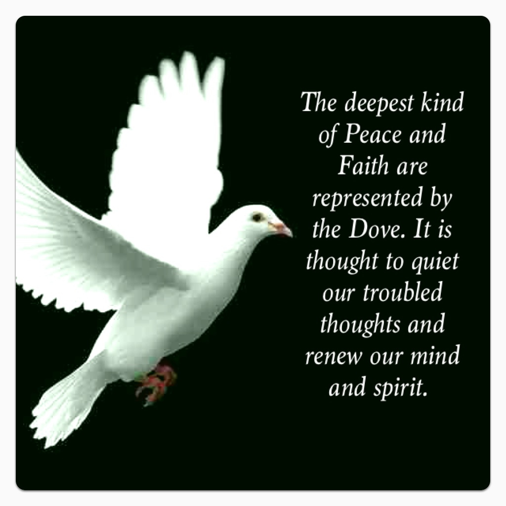 Doves-so-very-peaceful-wallpaper-wp6003023