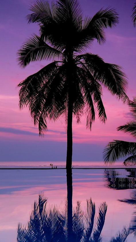Download-1080x1920-palm-trees-night-silhouettes-Sony-Xperia-Z-ZL-Z-Samsung-Galaxy-S-wallpaper-wp3404938