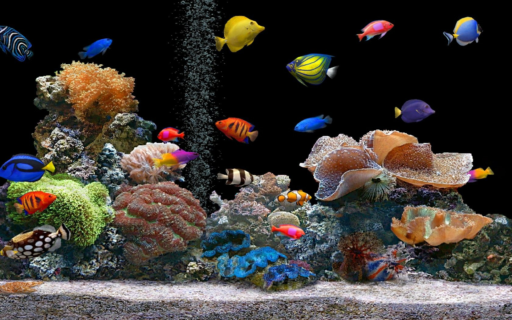 Download-Live-Hd-Fish-Aquarium-3d-Desktop-Aquarium-3d-wallpaper-wp3404887