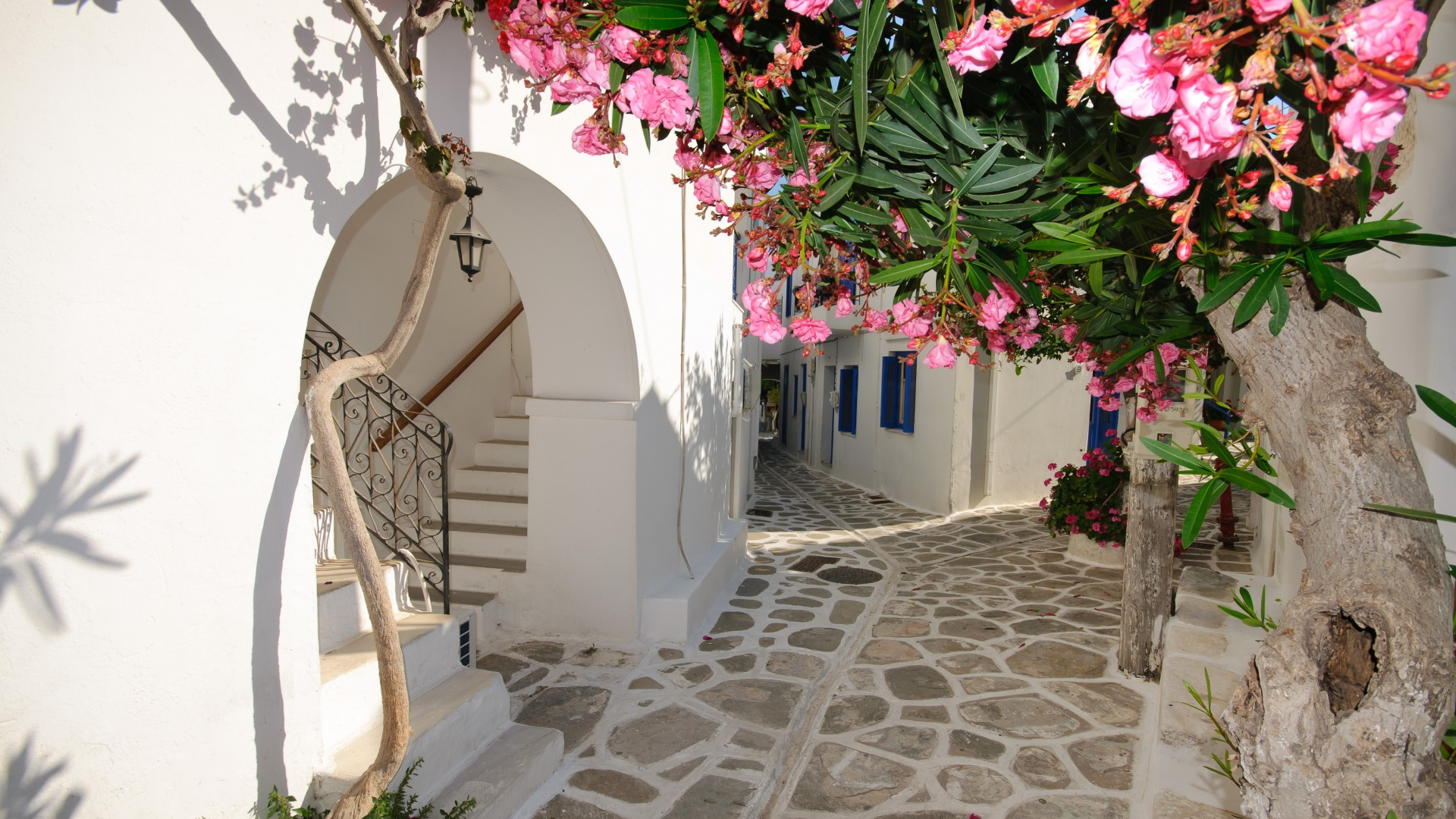 Download-flowers-home-Santorini-Greece-section-Resolution-1920x1080-wallpaper-wp3605111
