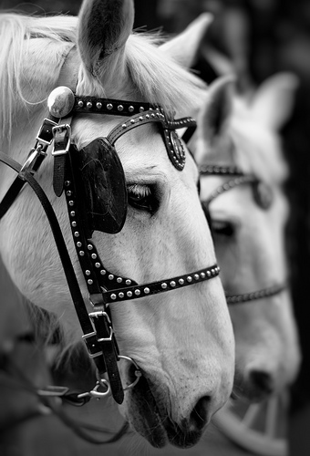 Draft-Horses-wallpaper-wp5006910