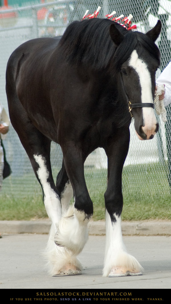 Draft-horse-Clydesdale-by-SalsolaStock-on-DeviantArt-wallpaper-wp5006908