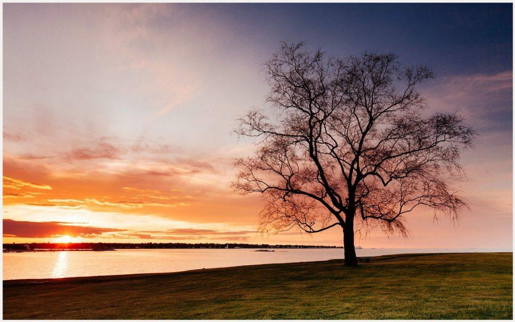 Dry-Tree-On-Beach-Sunset-dry-tree-on-beach-sunset-1080p-dry-tree-on-beach-sun-wallpaper-wp3405103