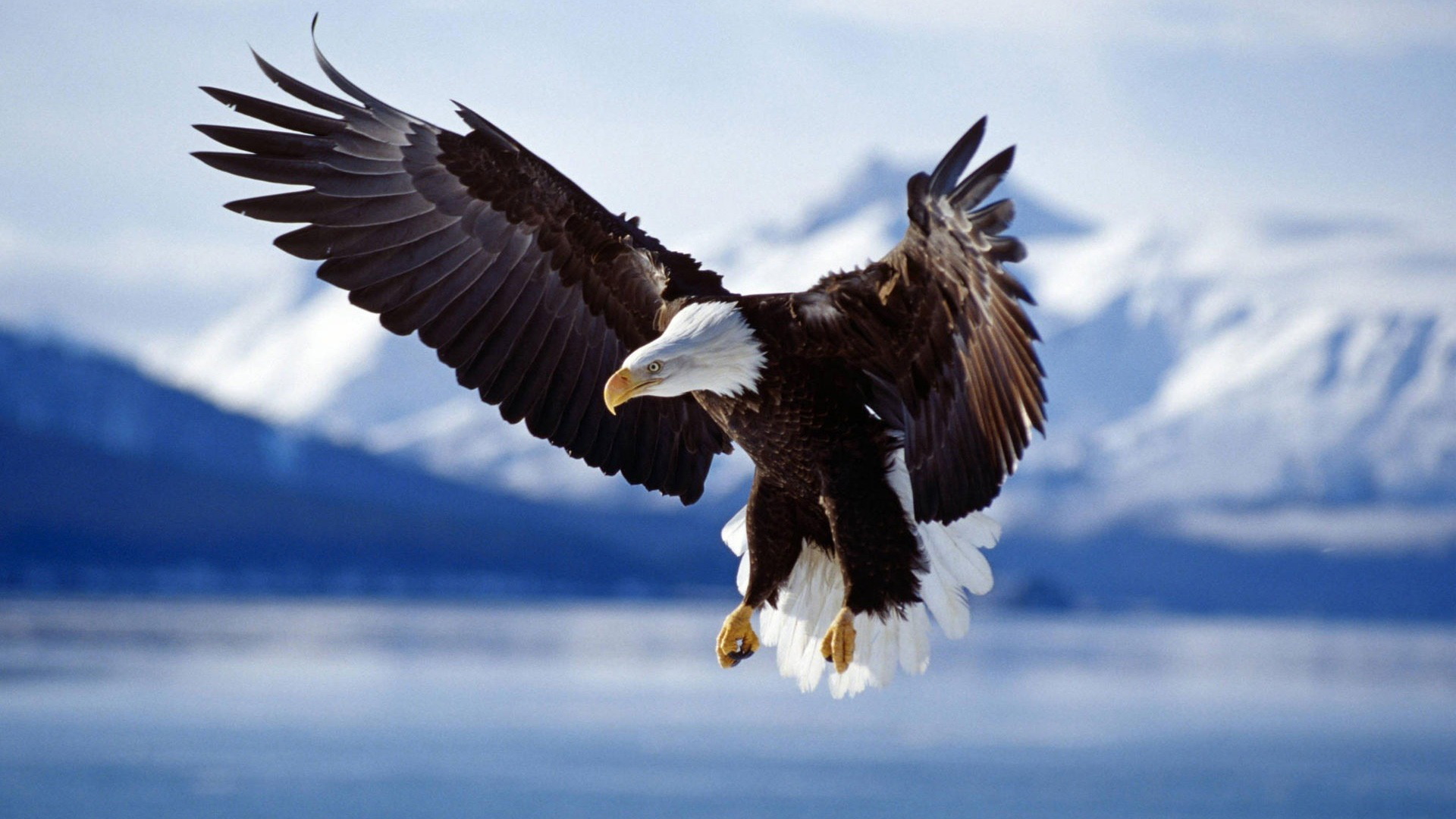 Eagle-in-Fight-1920x1080-wallpaper-wp36012039
