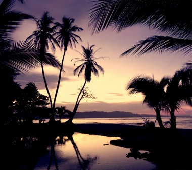 Evening-Palms-Android-wallpaper-wallpaper-wp4806230