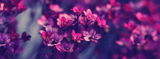 Facebook-Timeline-Cover-Flowers-Violet-Purple-wallpaper-wp5805517-1