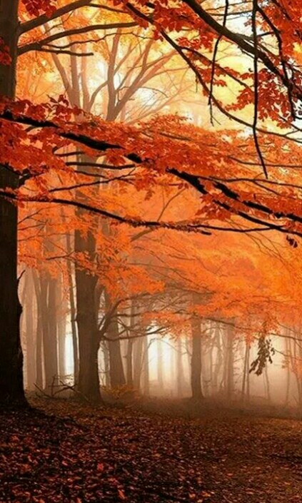 Fall-Colors-Autumn-Beauty-wallpaper-wp4806328