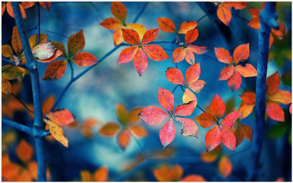 Fall-Leaves-Of-Autumn-Season-fall-leaves-of-autumn-season-1080p-fall-leaves-o-wallpaper-wp3405370
