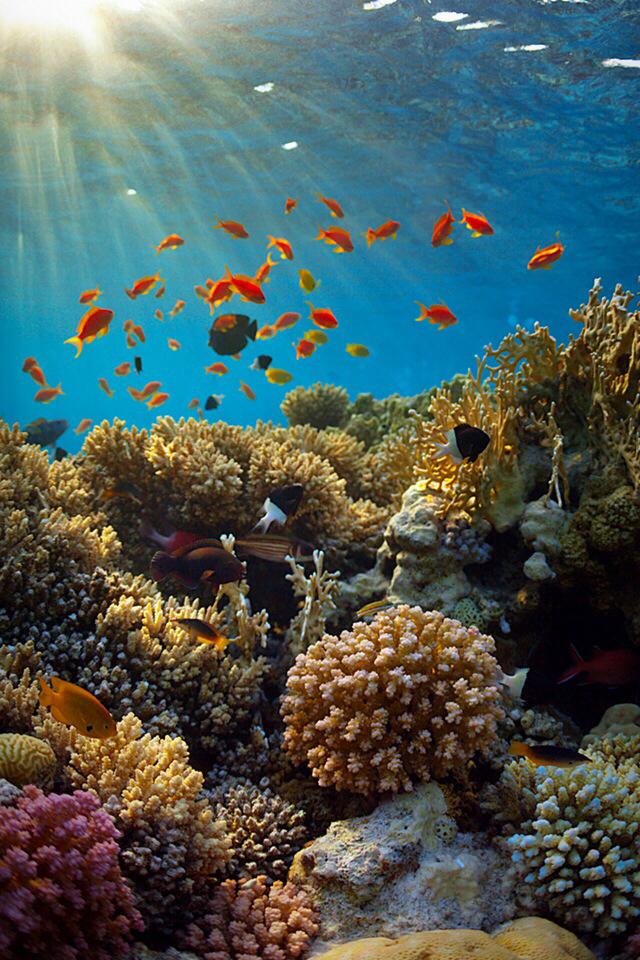 Fish-Sea-wallpaper-wp5203225