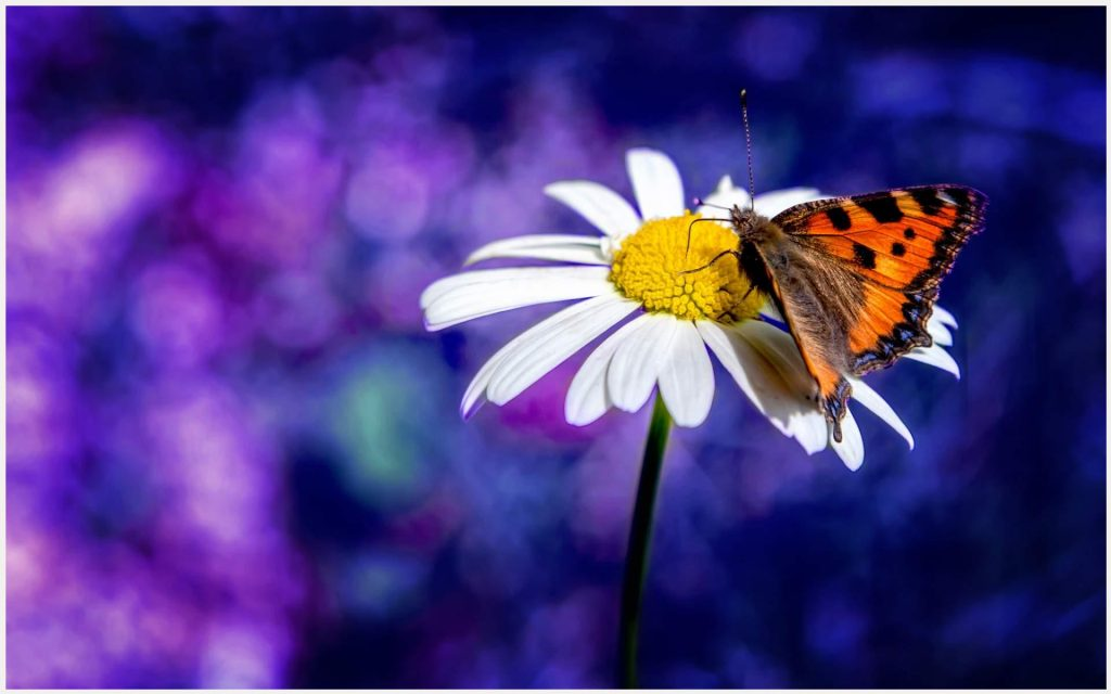 Flower-And-Butterfly-Cute-flower-and-butterfly-cute-1080p-flower-and-butterfl-wallpaper-wp3405631