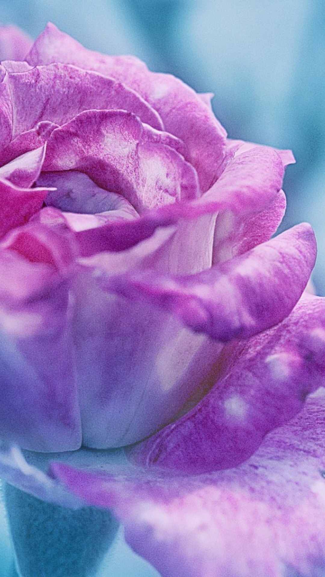 Flower-Samsung-Galaxy-S-1080%C3%971920-wallpaper-wp3405639