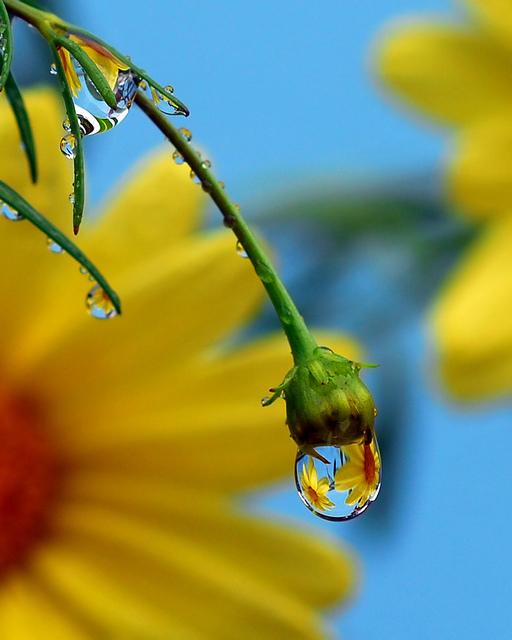 Flower-dew-wallpaper-wp4806453