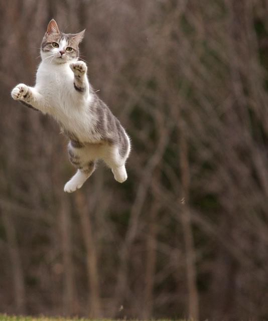 Flying-Cat-wallpaper-wp580957