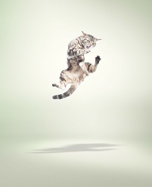 Flying-cat-Adrian-Samson-Escape-Into-Life-art-photography-wallpaper-wp5805746
