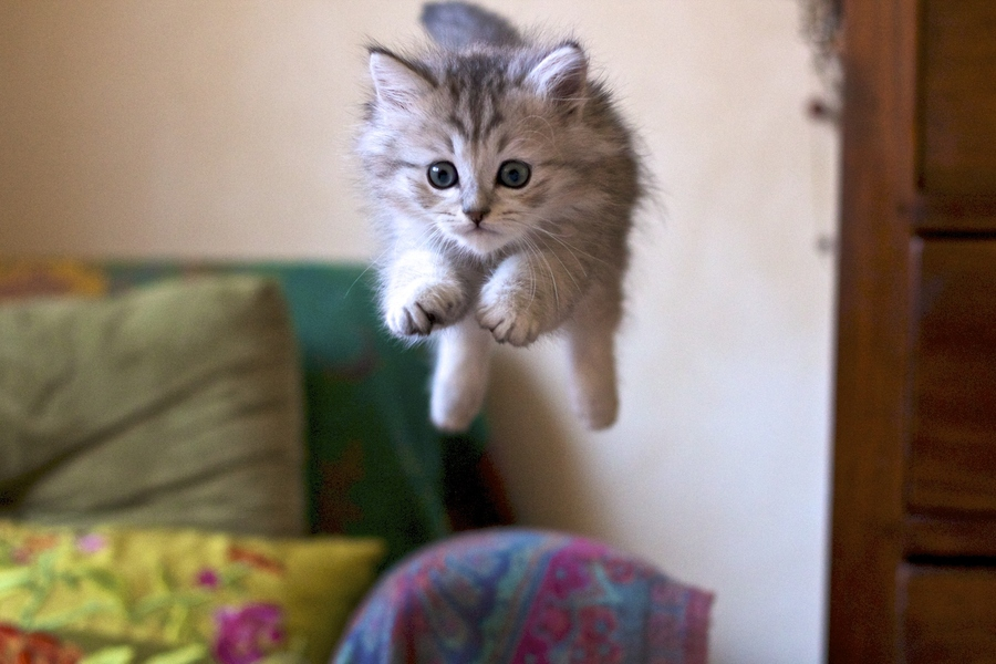 Flying-cat-by-Patricio-Dell-Orto-wallpaper-wp5805742