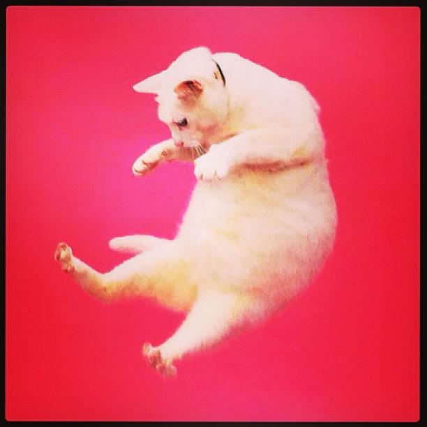 Flying-cat-instagram-caturday-wallpaper-wp5805745