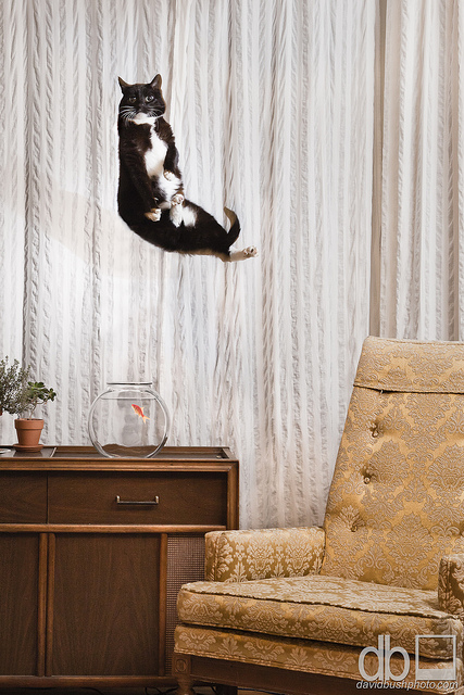 Flying-cat-looking-for-fish-wallpaper-wp5805743
