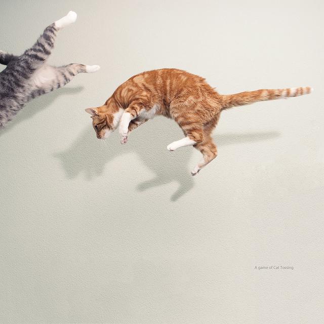 Flying-cats-by-Paula-Danielse-http-www-pauladanielse-nl-wallpaper-wp5805748