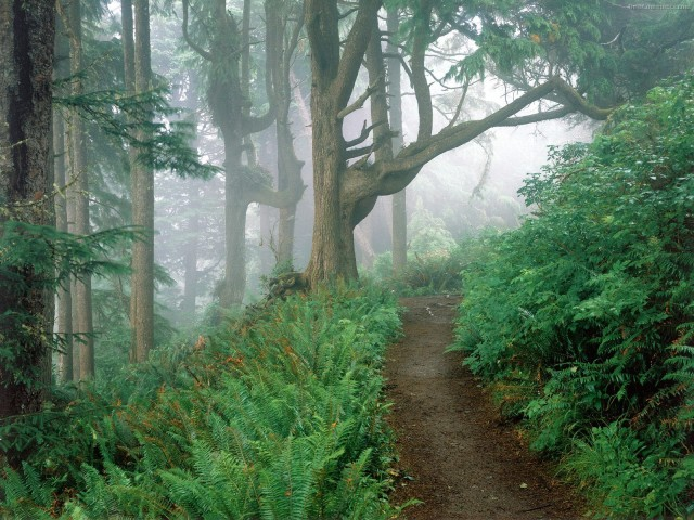 Foggy-Forest-wallpaper-wp4605948-1