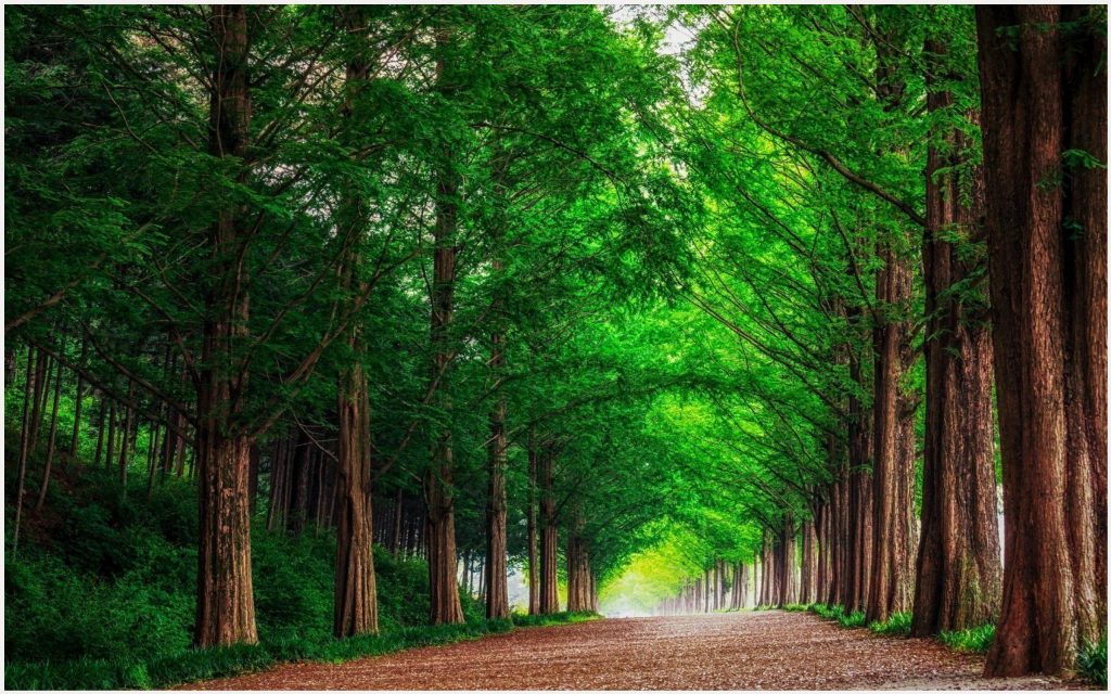 Forest-Trees-Road-Landscape-forest-trees-road-landscape-1080p-forest-trees-ro-wallpaper-wp3405730