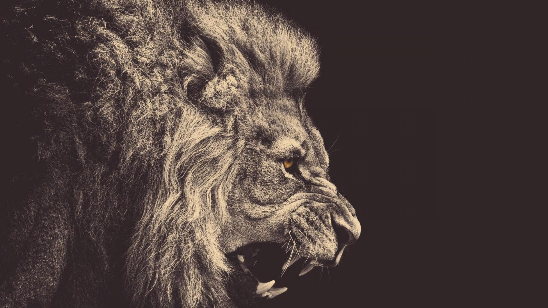 Full-HD-1080p-Animals-Desktop-Backgrounds-HD-Downloads-wallpaper-wp3406010