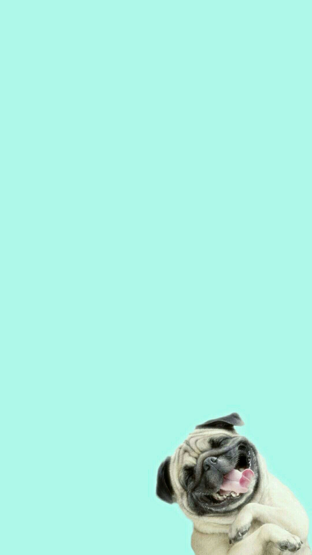 Funny-Pug-Dog-Laughing-Android-wallpaper-wp5405161