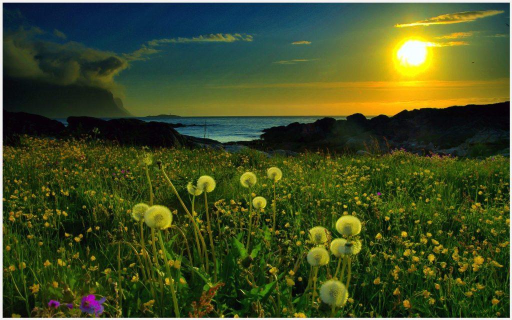 Green-Beach-Sunrise-green-beach-sunrise-1080p-green-beach-sunrise-d-wallpaper-wp3606377