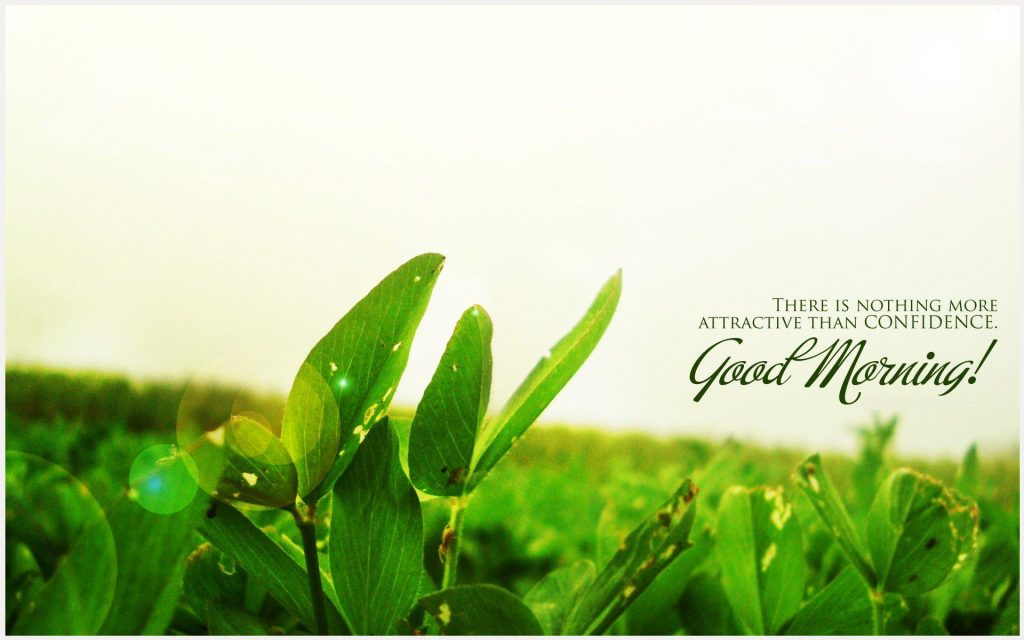 Green-Leaves-Of-Good-Morning-green-leaves-of-good-morning-1080p-green-leaves-wallpaper-wp3606388