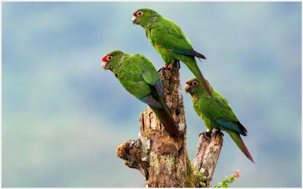 Green-Parrots-Cute-Birds-green-parrots-cute-birds-1080p-green-parrots-cute-bi-wallpaper-wp3406422