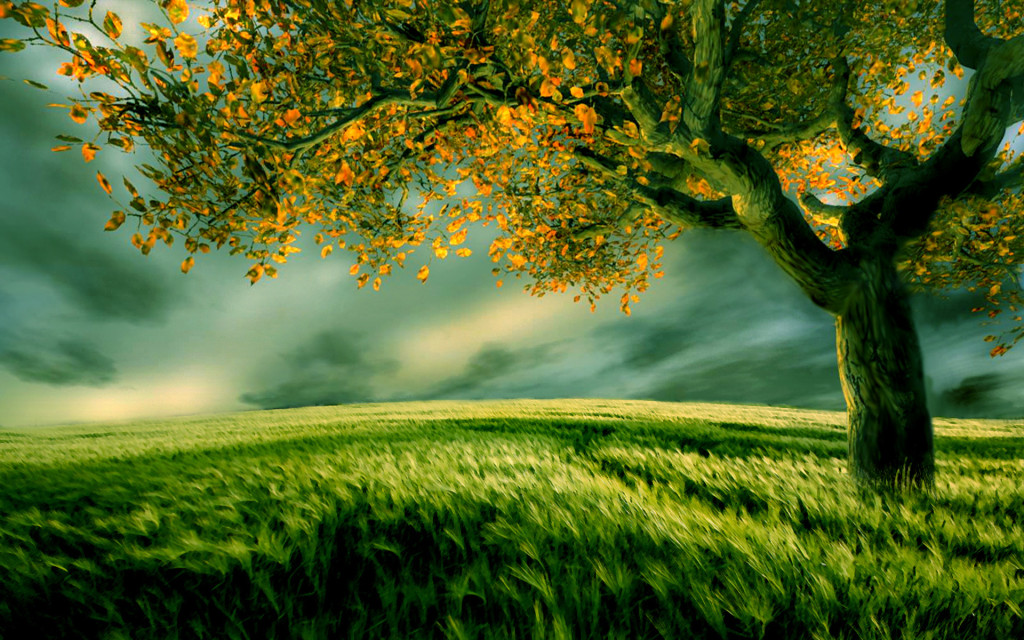 Greenery-Field-wallpaper-wp5405418